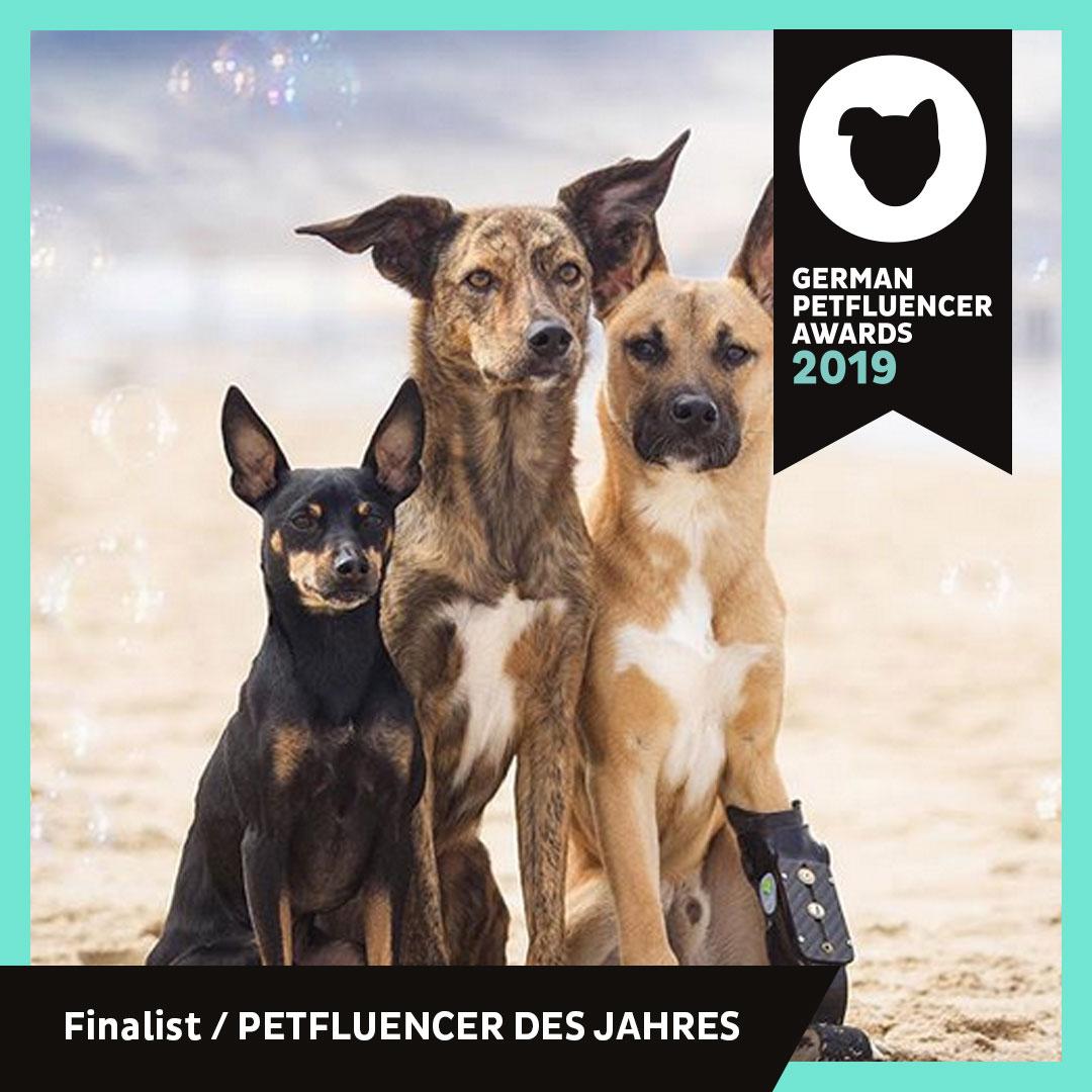 verpinscht_Finalist_Petfluencer_Award_2019