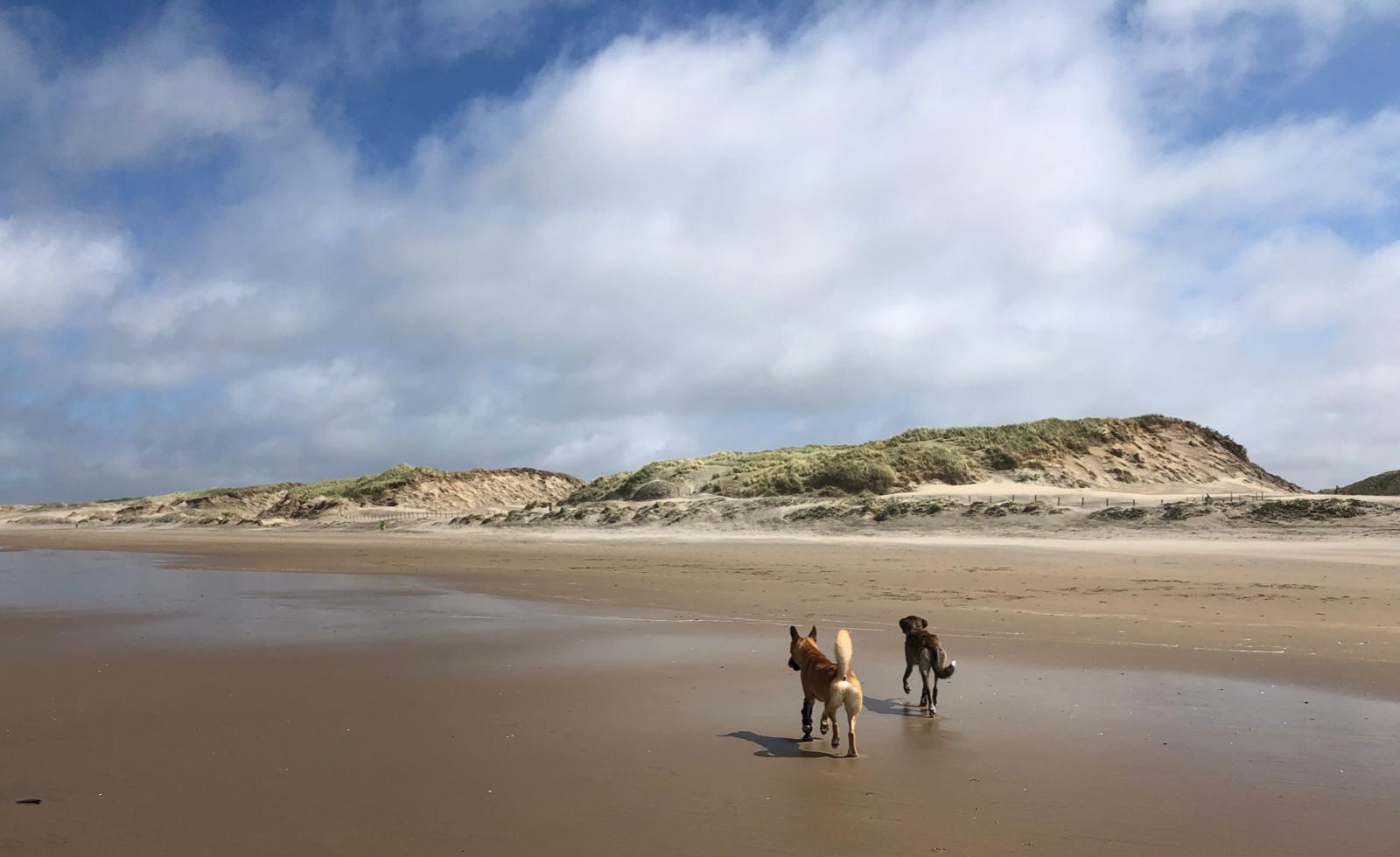 Hundestrand Parnassia an Zee